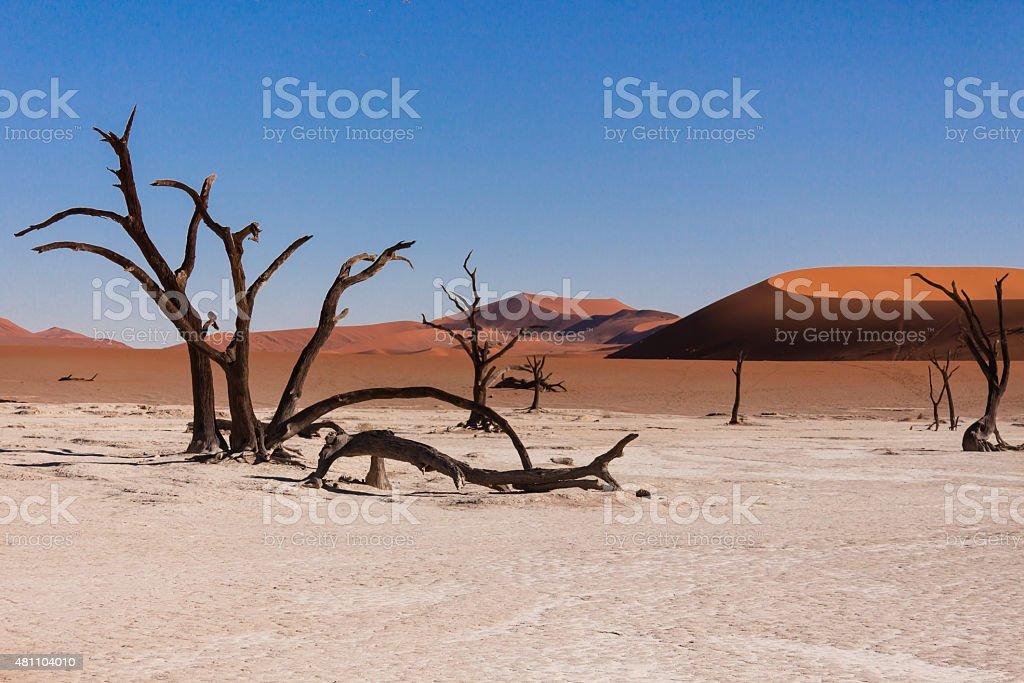 Deadvlei Namibia stock photo