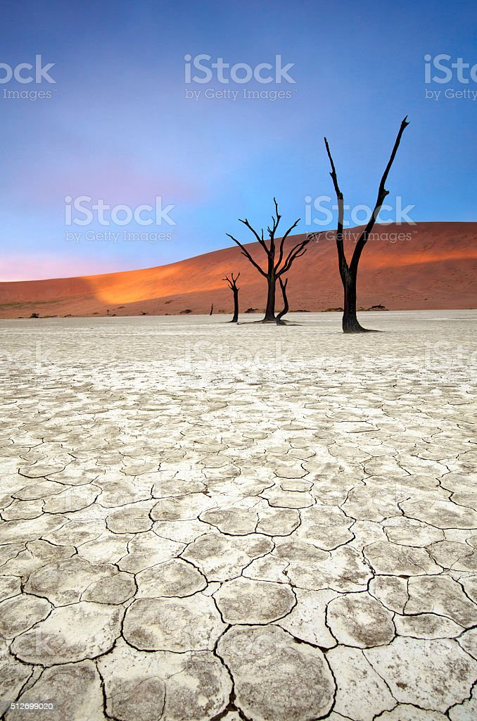 Deadvlei, Namibia. stock photo