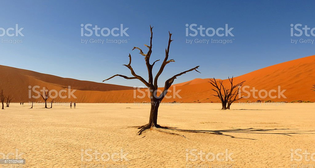 Deadvlei, Sossusvlei stock photo