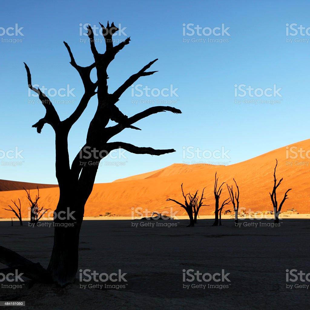 Deadvlei Tree Silhouette at sunrise in Sossusvlei Namibia stock photo