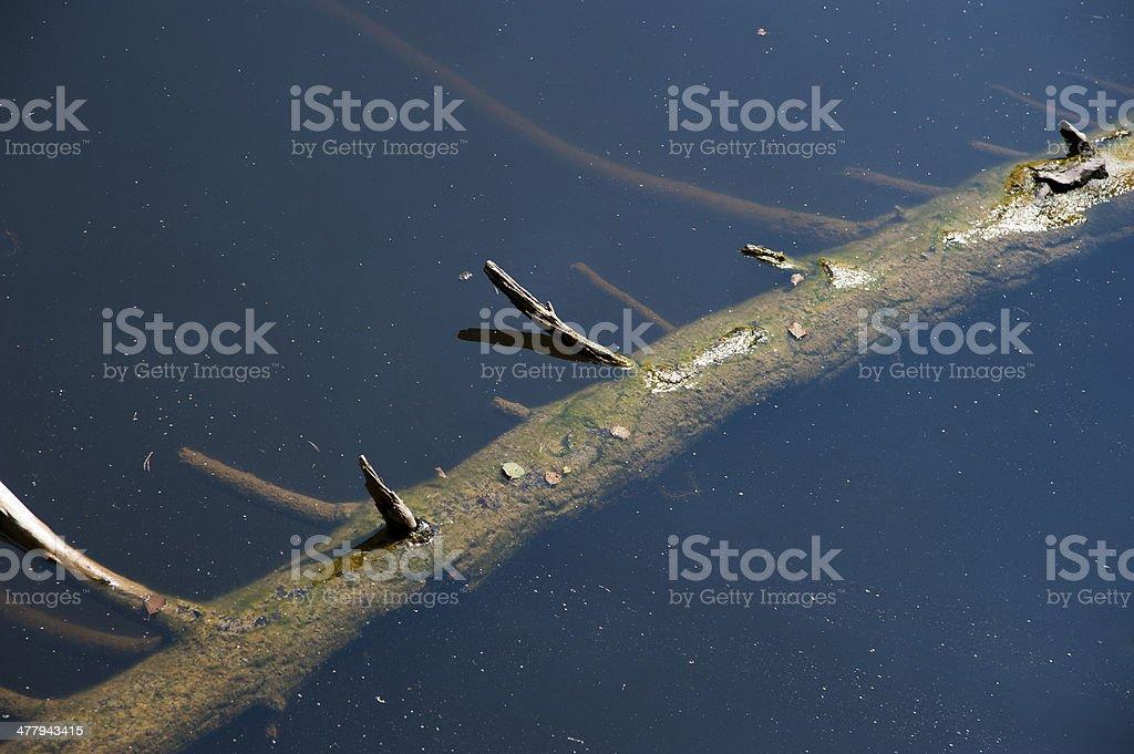 deadwood in water royalty-free stock photo