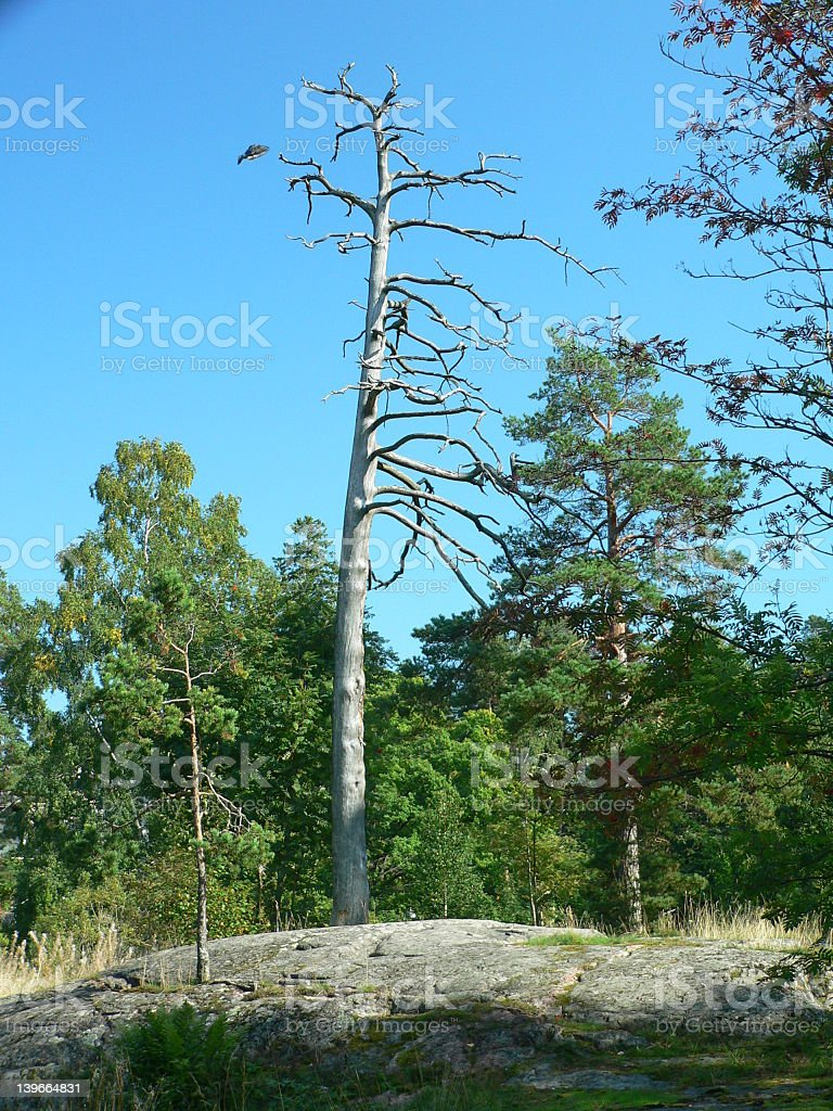 Dead-wood royalty-free stock photo