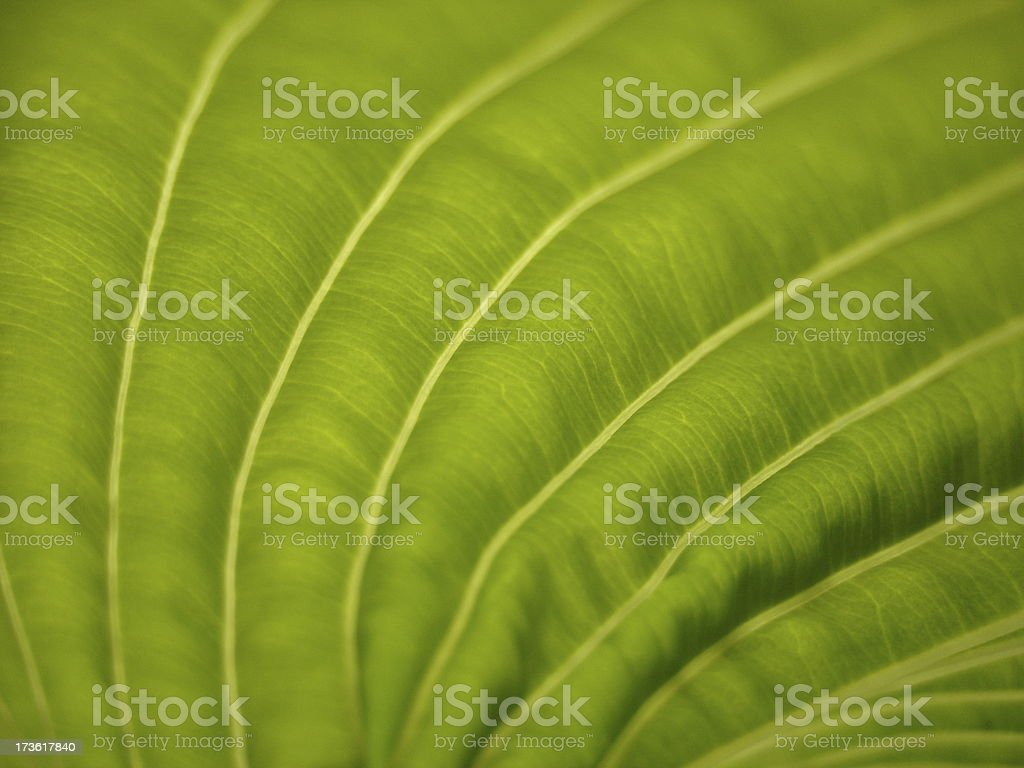 Deatail of a Leaf royalty-free stock photo