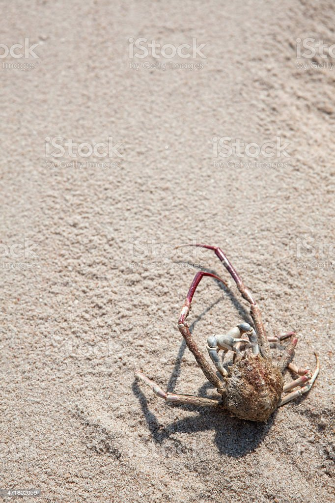death crab on the beach royalty-free stock photo