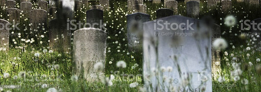 Death & Dandelions royalty-free stock photo