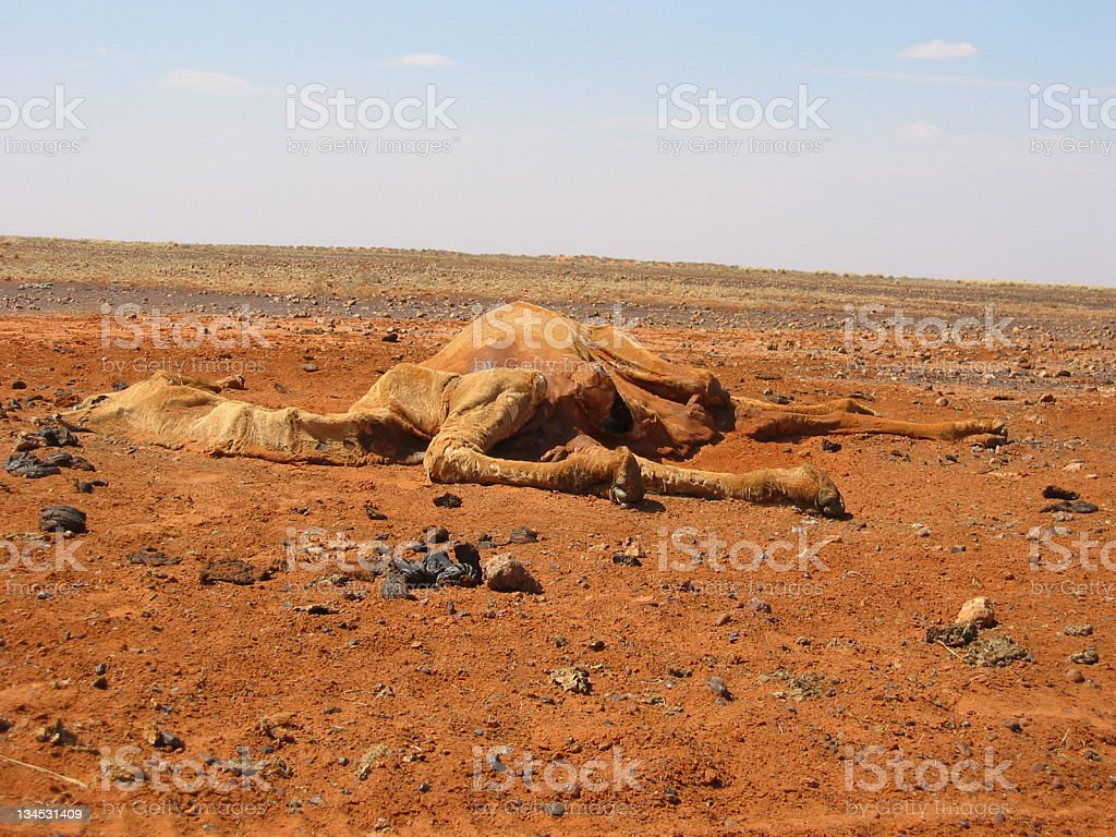 Death In The Desert royalty-free stock photo