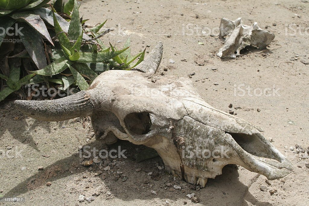 Death in the Desert stock photo