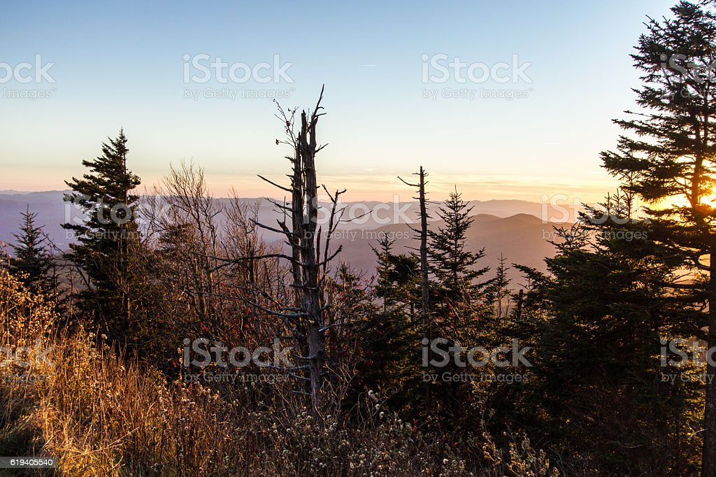 Death Of A Smoky Mountain Forest stock photo
