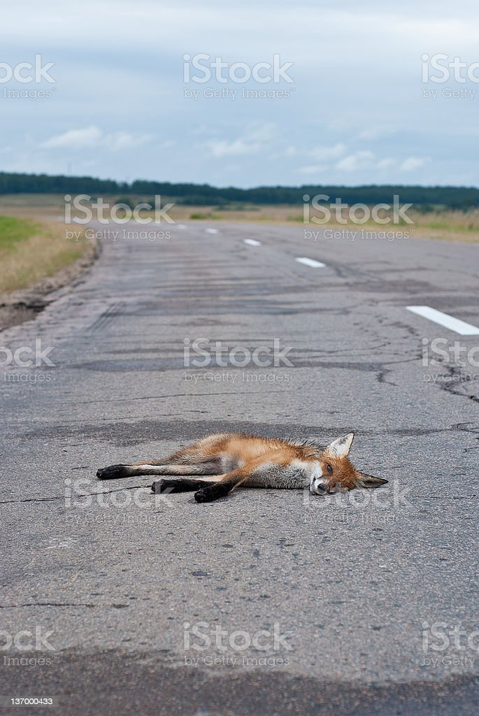Death on the road royalty-free stock photo