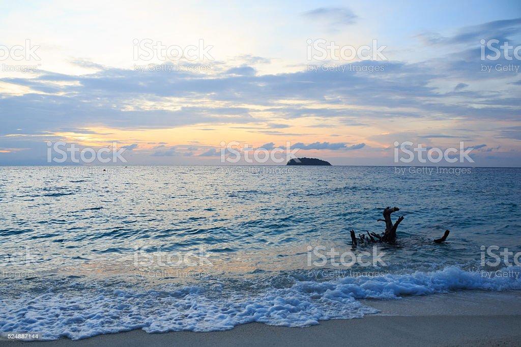 Смерть корень дерева деревянный на ясно песчаный пляж и побережье Стоковые фото Стоковая фотография