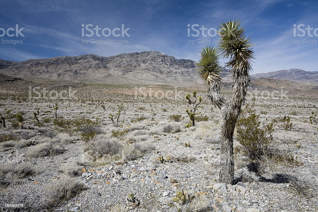 Death Valley Landscape stock photo