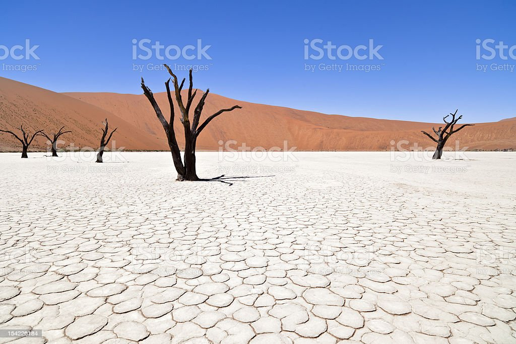 Deathvlei in Namibia stock photo