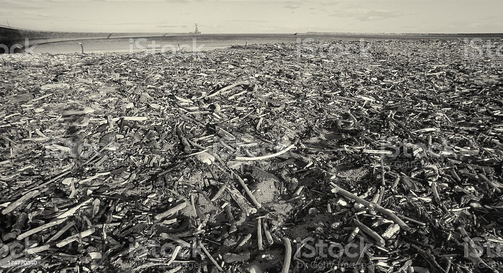 Debris washed onshore - Dirty beach stock photo