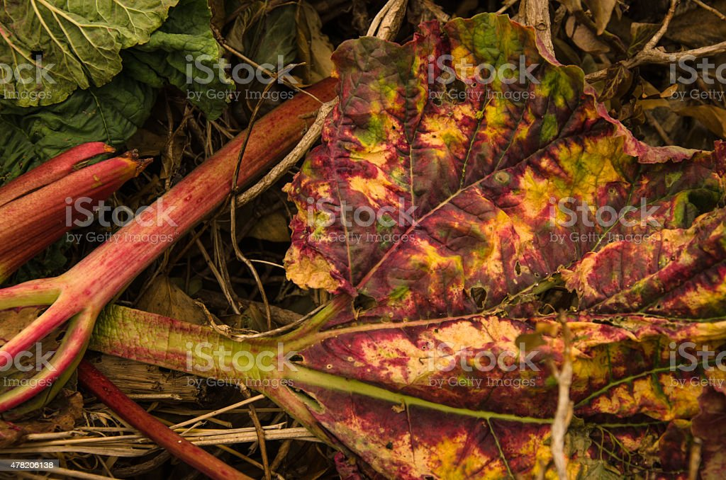 Decayed vegetable background stock photo