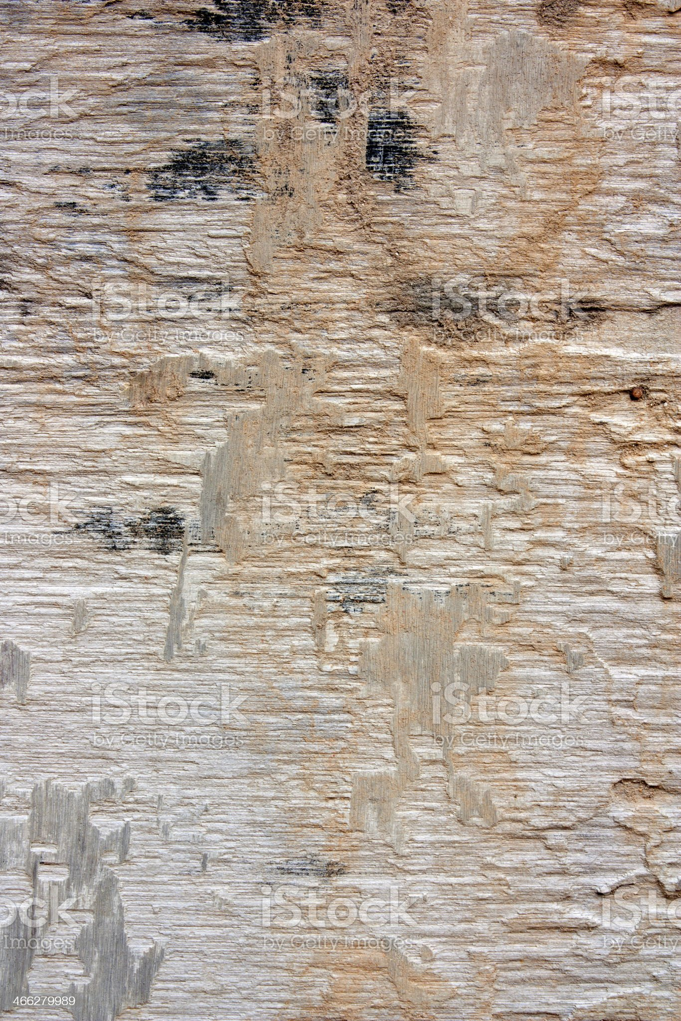 Decayed wood. royalty-free stock photo