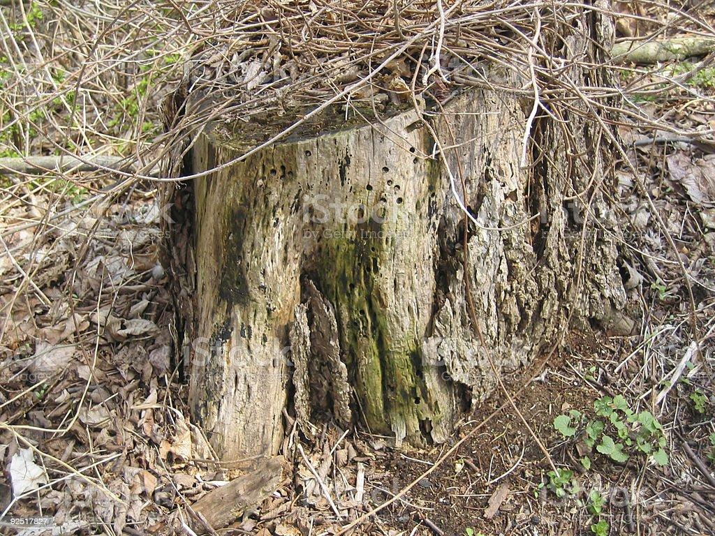 Decaying Camouflaged Stump stock photo