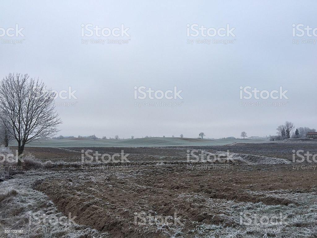 December field stock photo