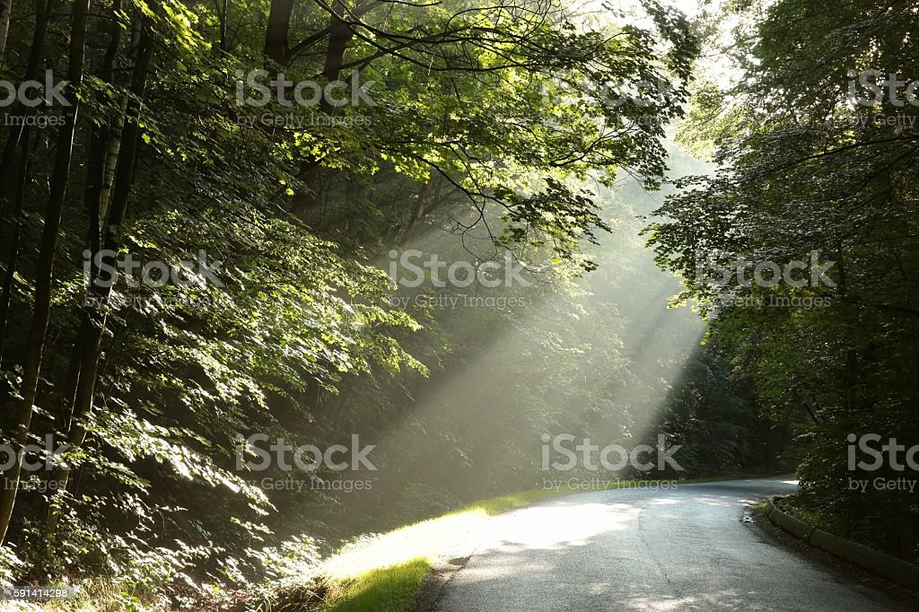 Deciduous forest after rainfall stock photo
