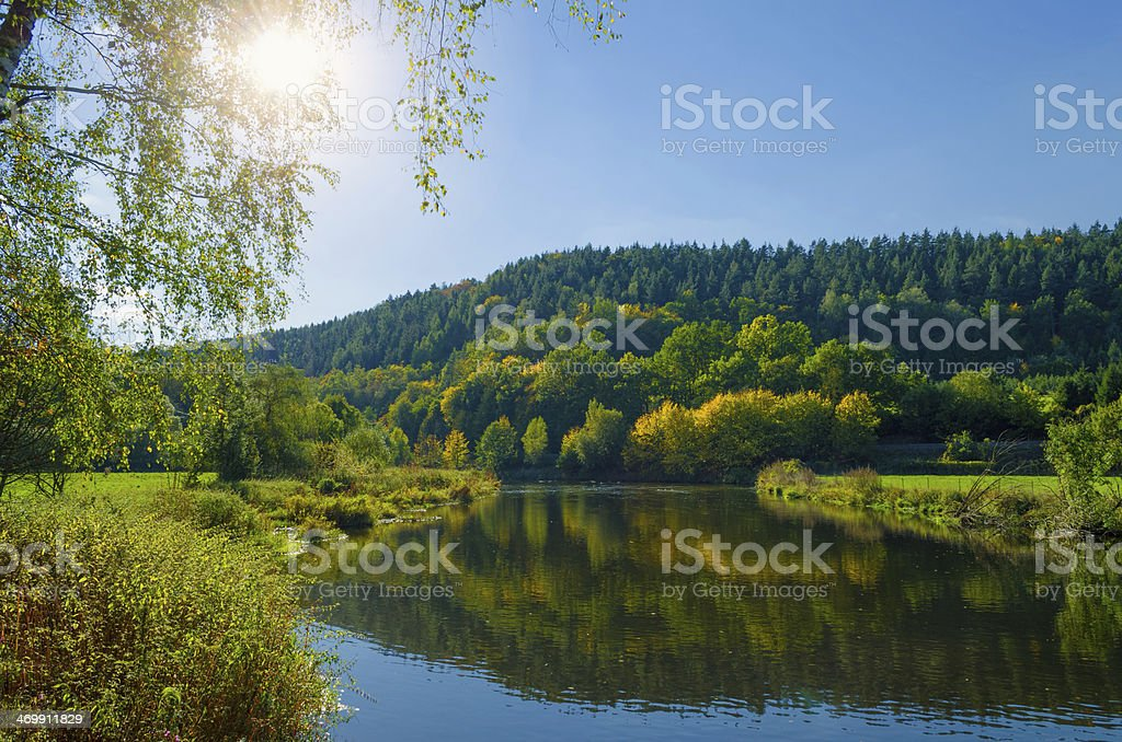 deciduous forest in sunlight at a river stock photo