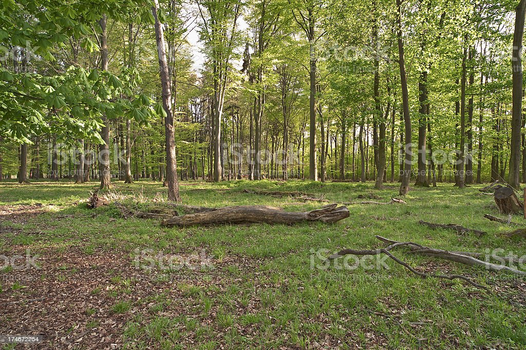 Deciduous forest stock photo