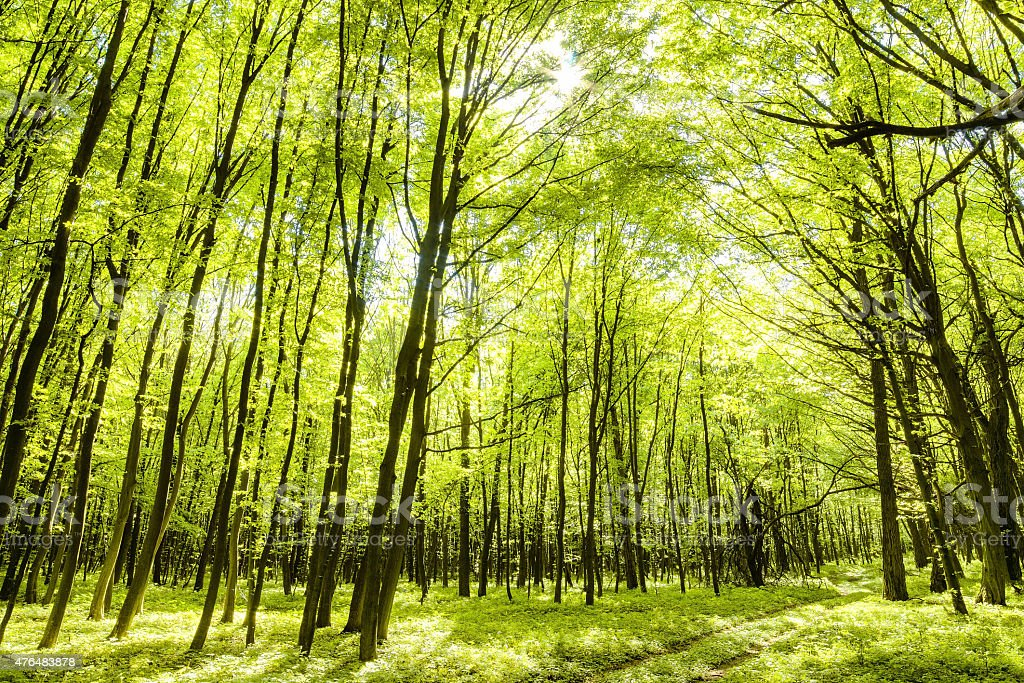 Deciduous forest stock photo