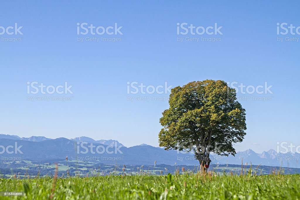 Deciduous tree with mountain scenery stock photo