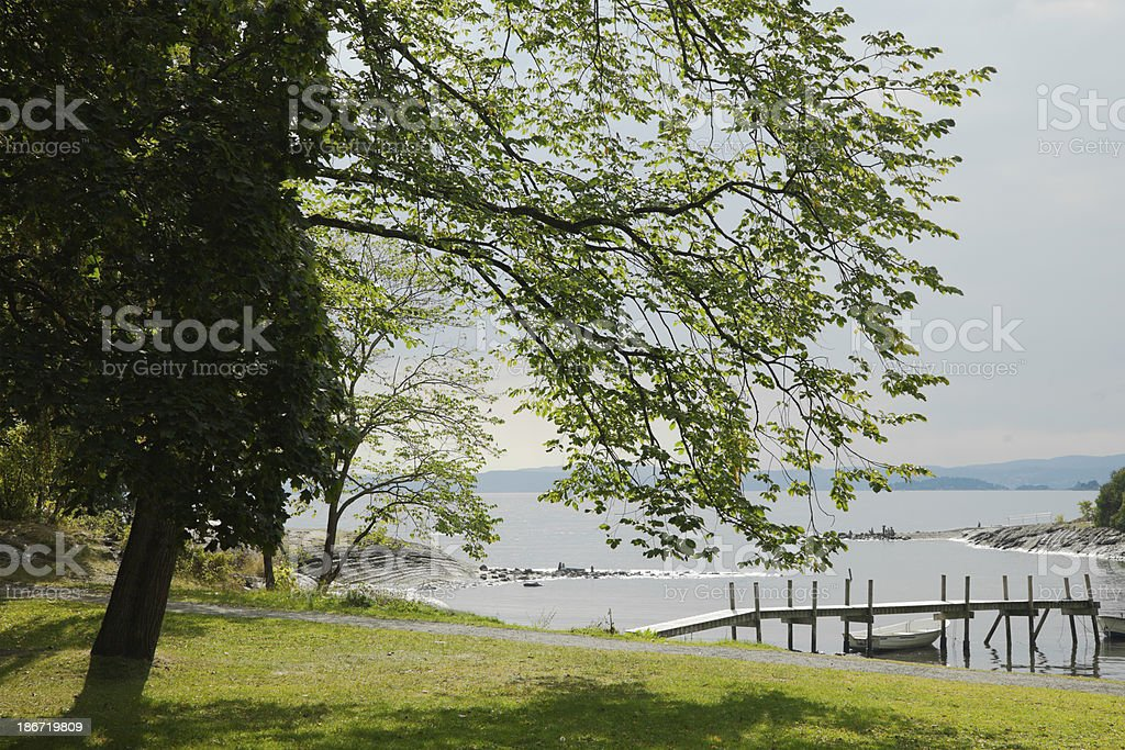 Deciduous trees and green lawn by the sea. royalty-free stock photo