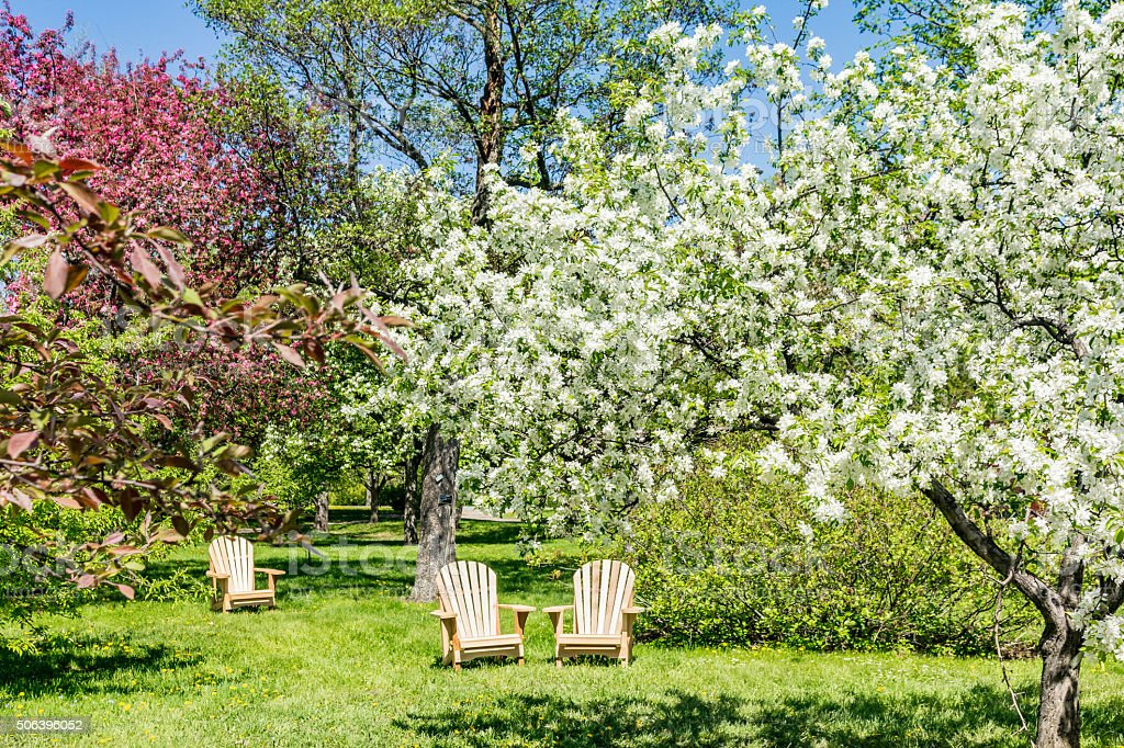 Deck chairs under blossoming apple trees stock photo