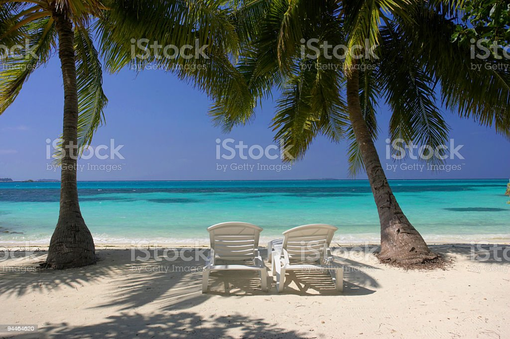 deckchairs under palmtrees royalty-free stock photo