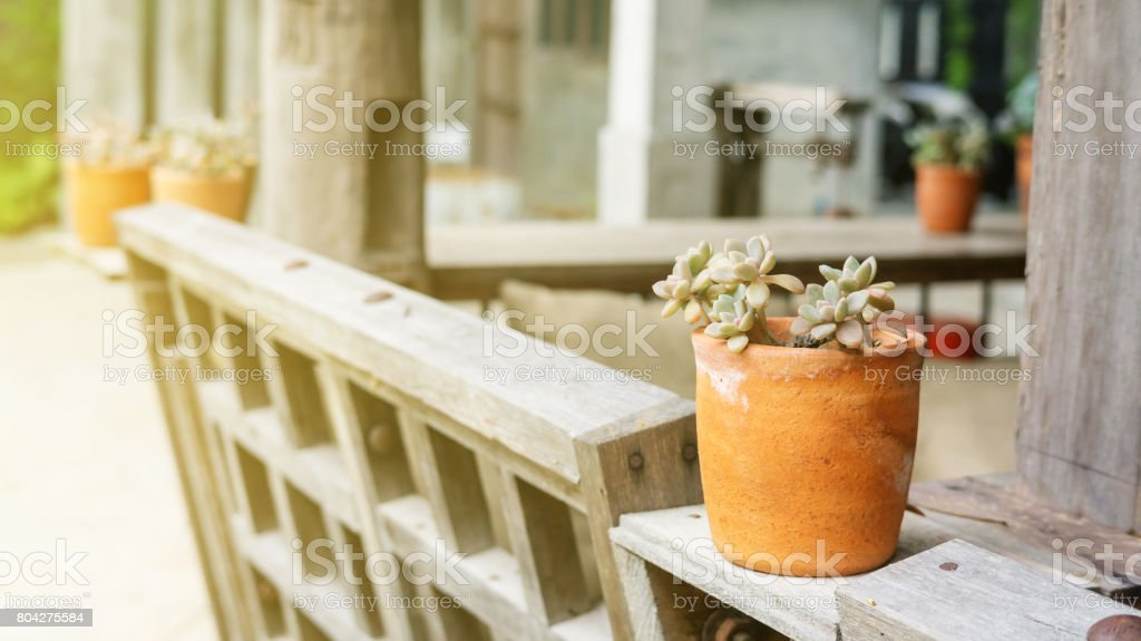 decking and plant with small garden decoration. stock photo