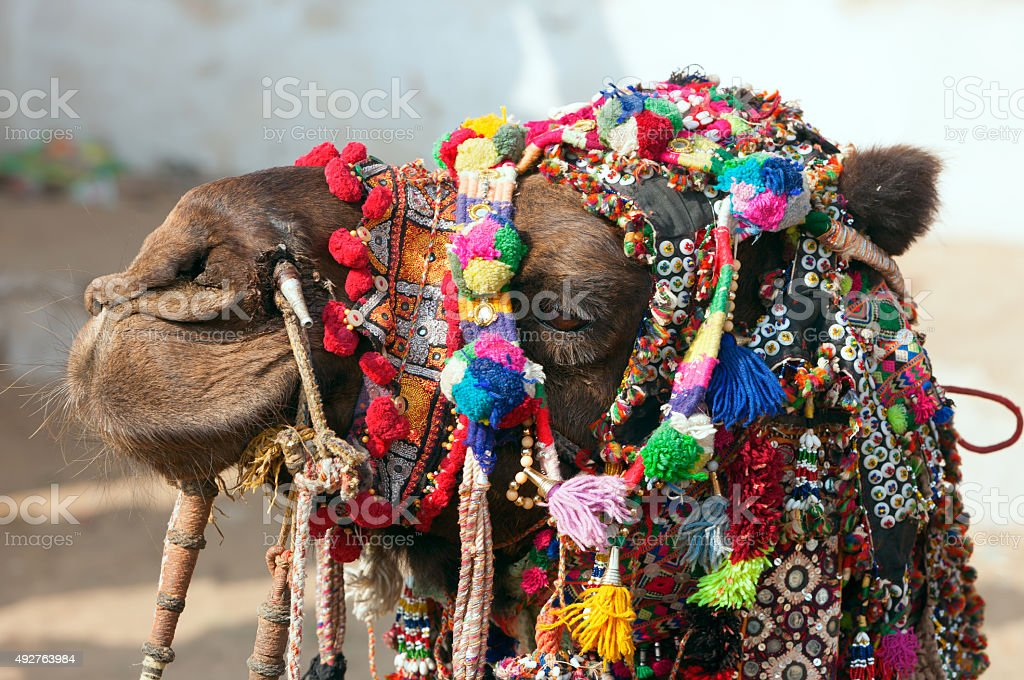 Decorated camel at the Pushkar fair. Rajasthan, India. stock photo