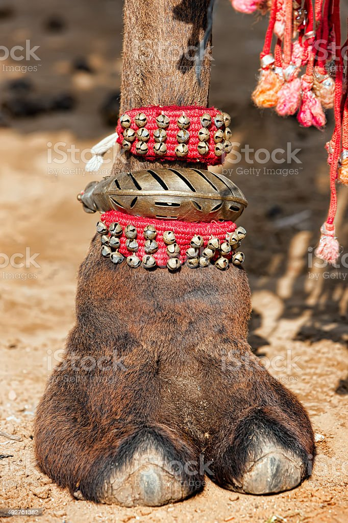 Decorated camel foot stock photo