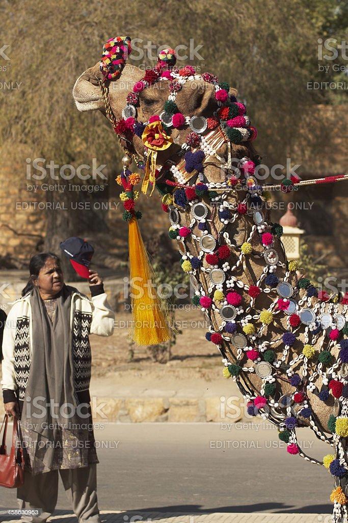 Decorated Camel in Jaisalmer stock photo