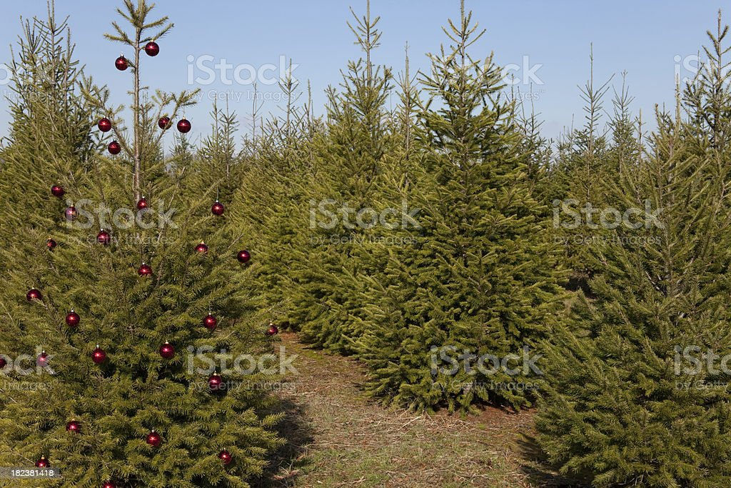 Decorated Christmas Tree in Field royalty-free stock photo