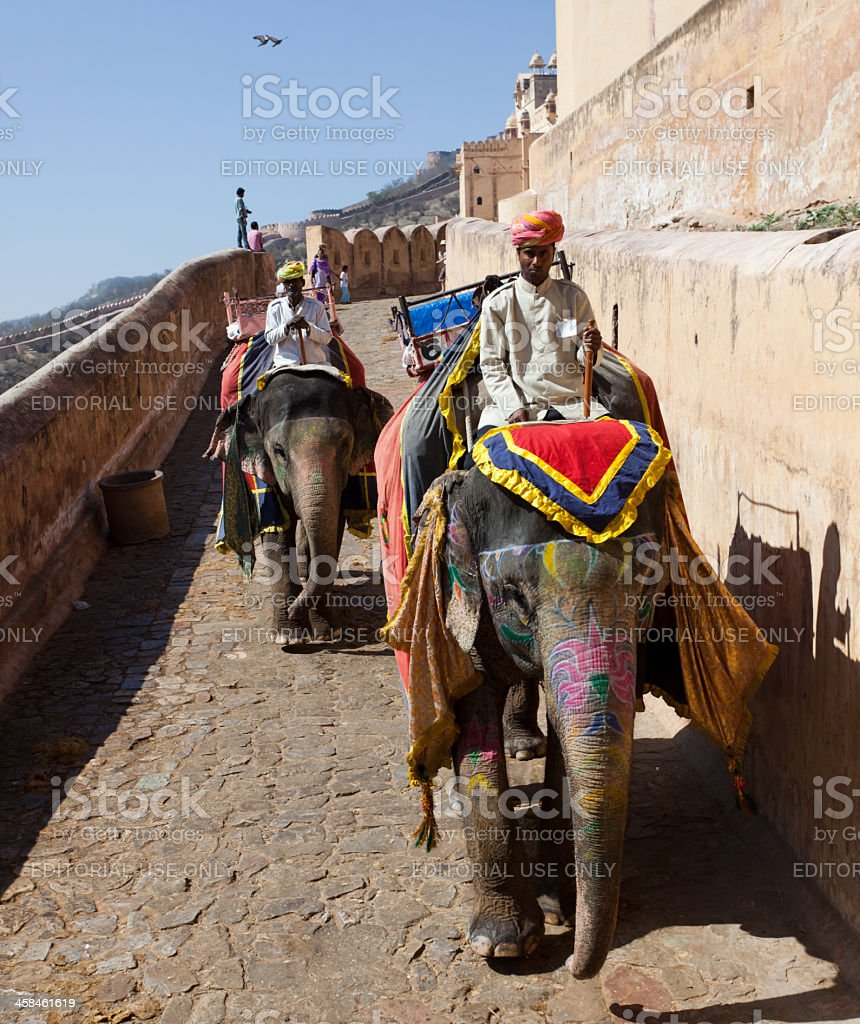 Decorated elephant in Jaipur royalty-free stock photo