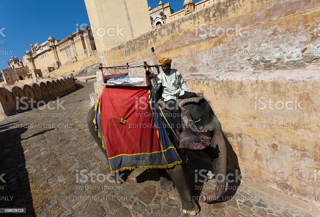 Decorated Elephant in Jaipur royalty-free stock photo