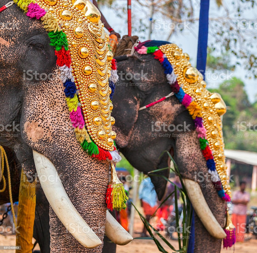 Decorated elephants in Hindu temple at festival stock photo