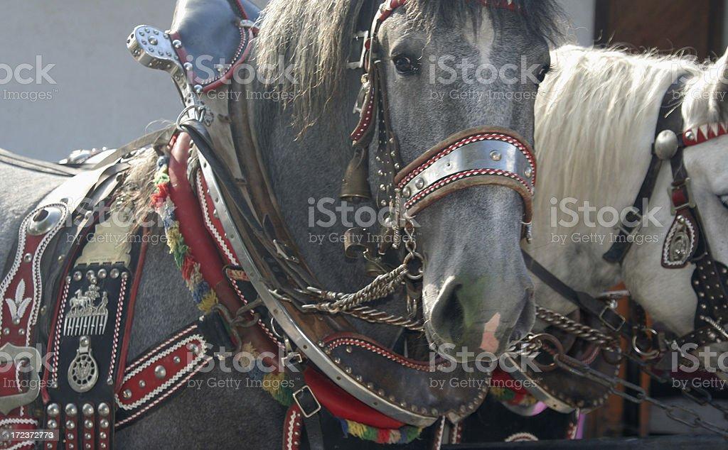 Decorated horse stock photo