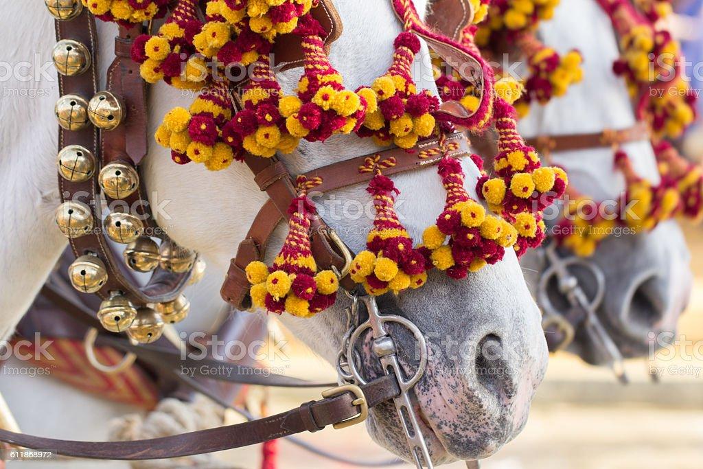 decorated horses for celebration stock photo