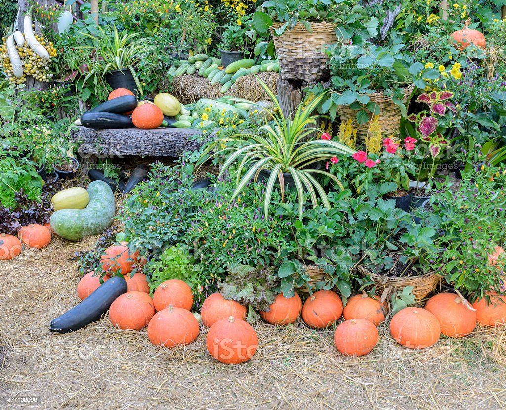 Decorated ripe vegetables stock photo