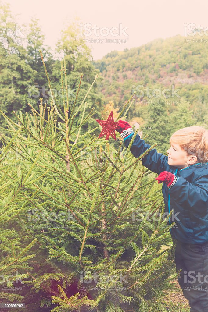 decorating the christmas tree outdoor stock photo