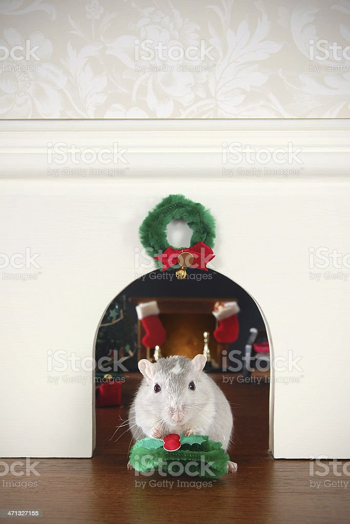 Decorating the Mouse Hole for Christmas stock photo