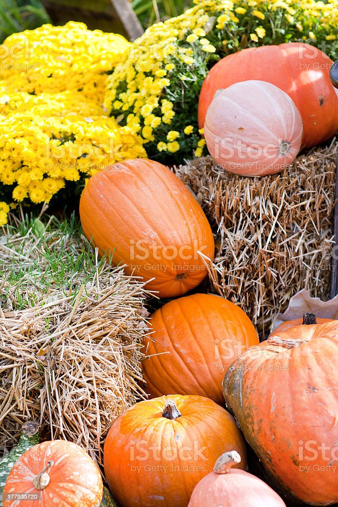 Decoration of fresh different pumpkin royalty-free stock photo