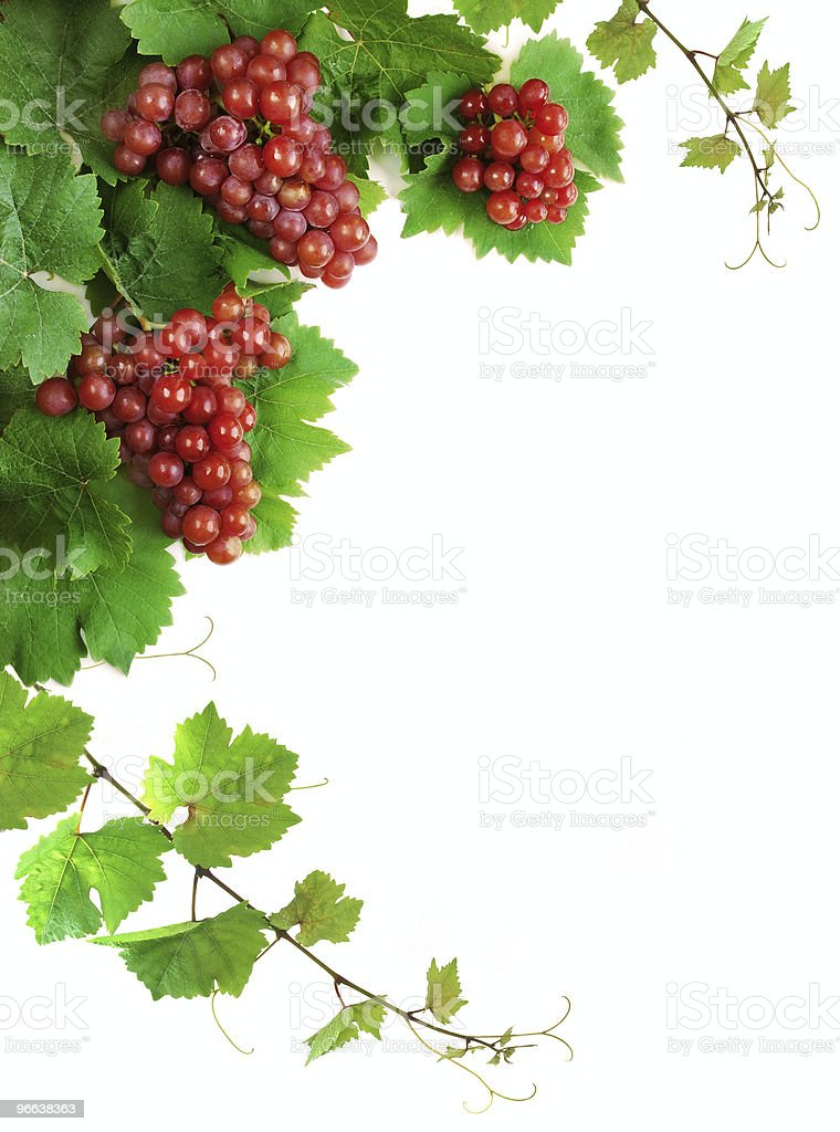 Decoration of grapevine with grape clusters royalty-free stock photo