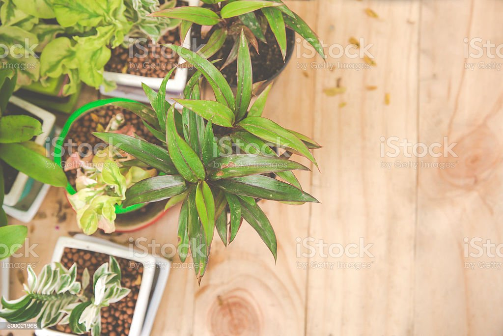 decoration Ornamental plants plant in pot on wood stock photo