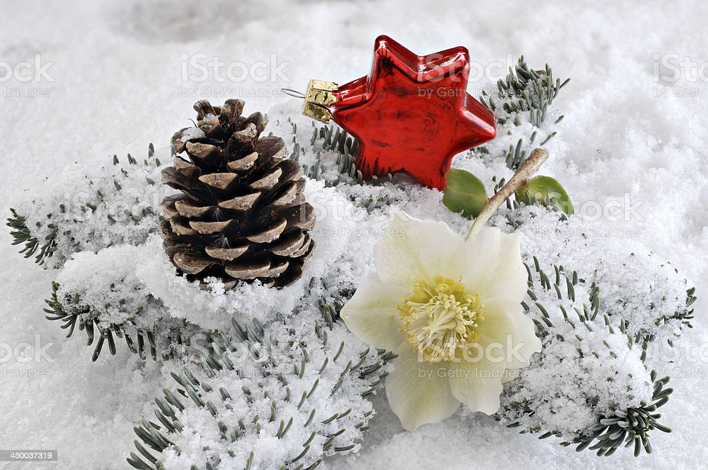 decoration red star and Christmas rose stock photo