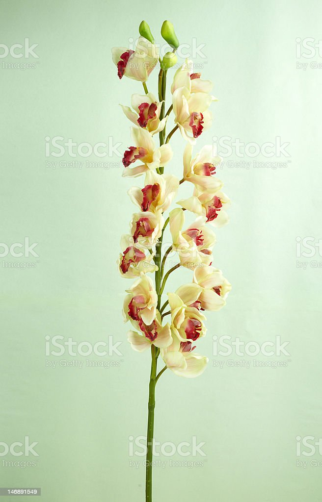 Decorative artificial flowers royalty-free stock photo