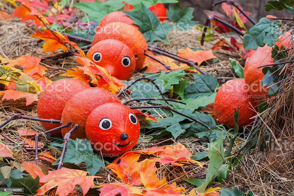 Decorative centipedes of pumpkins, decorations for autumn holidays stock photo