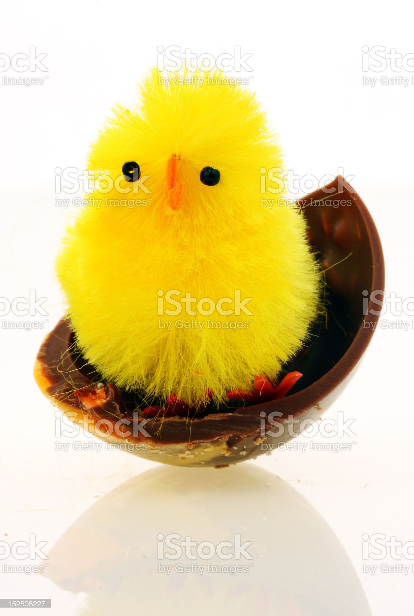 decorative easter chickens royalty-free stock photo
