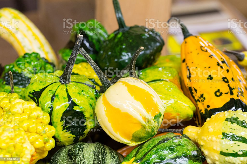 Decorative Fall Gourds in Basket Close Up stock photo